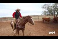 Bild: Working Ranch Horses