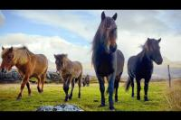 Bild: 1 HOUR of AMAZING HORSES From Around the World - Best Relax Music, Meditation, Stress Relief, Calm